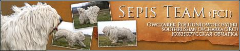 Sepis Team FCI hodowla - owczarek południoworosyjski, Jużak